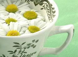 herbal_tea_camomile%20250x184px
