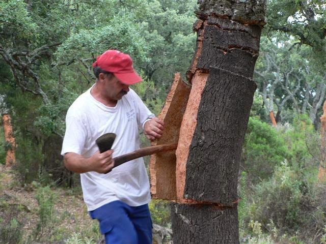 http://2.bp.blogspot.com/-YuayQUqKjjM/Un5hW4yte8I/AAAAAAAArk8/9nVaQuBPCdg/s640/cork+harvest+oak+5.jpg